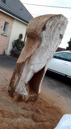Grume de chêne